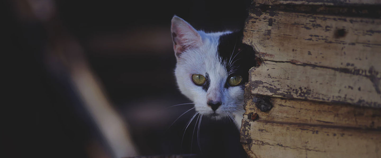 Lucunya Kucing Di Bali Jadi Tentara Sambut Hari Kemerdekaan
